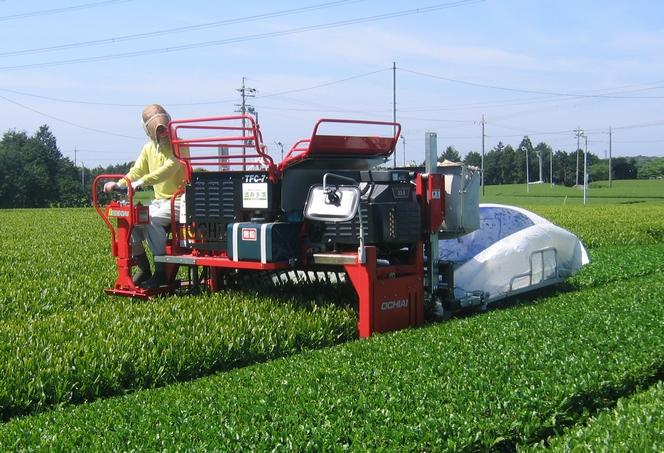 Tea harvesting is mechanized in Japan