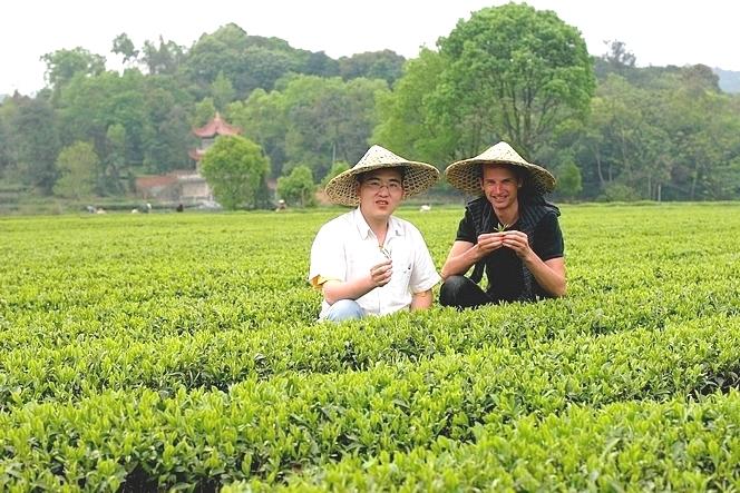 Ye Yingkai, producer of Fujian teas