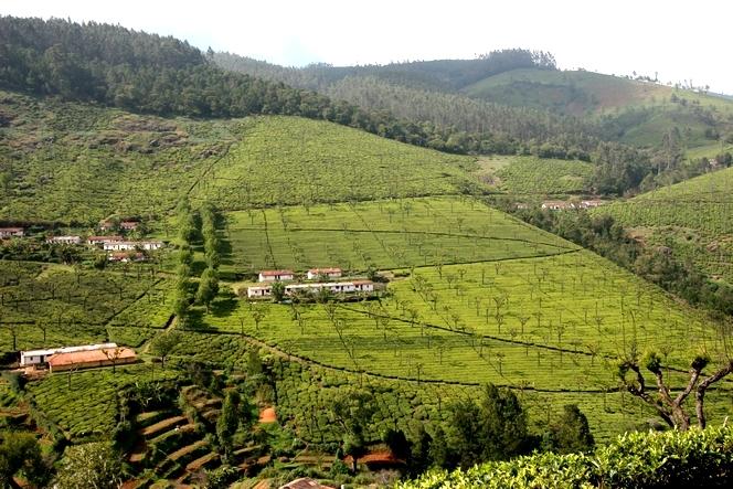 Tea plantations form small villages