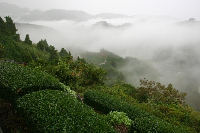 In Ryogôchi: high quality Gyokuro and Sencha teas