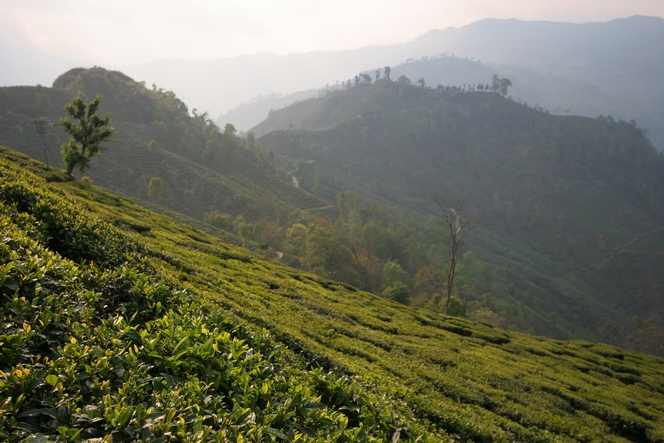 In Darjeeling, I have had to change my plans