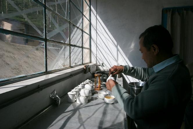 Darjeeling : tea trade is threatened