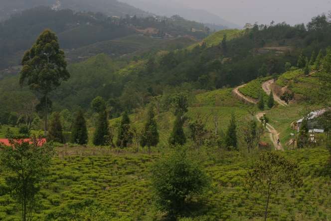 Splendid view from Kuwapani tea garden