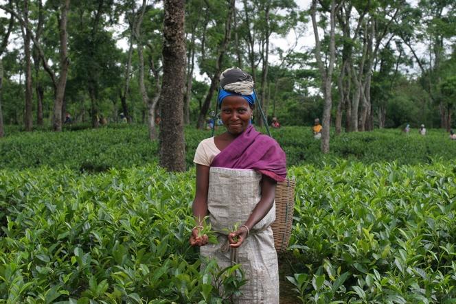 Charming tea plucker on Dufflating Tea Estate