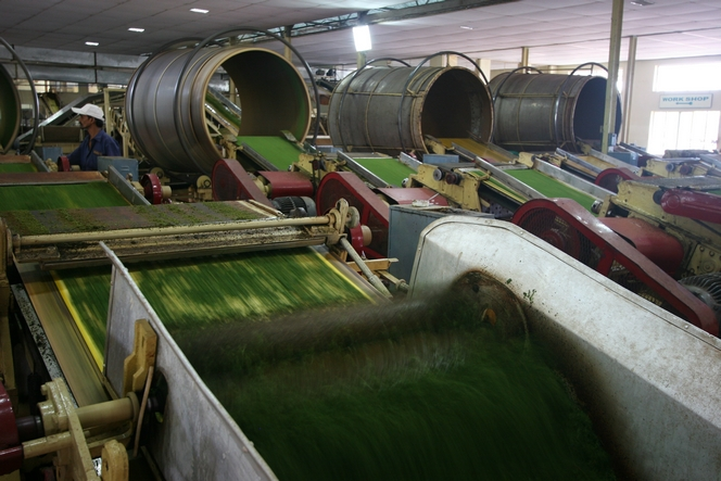 Machines used in the tea bag industry