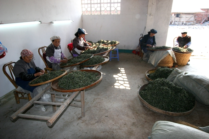 Selecting the best tea requires patience