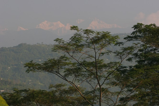 Third flush Darjeeling teas are coming