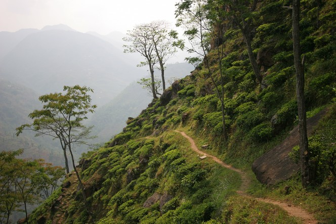 A Nepalese plantation in the middle of nowhere