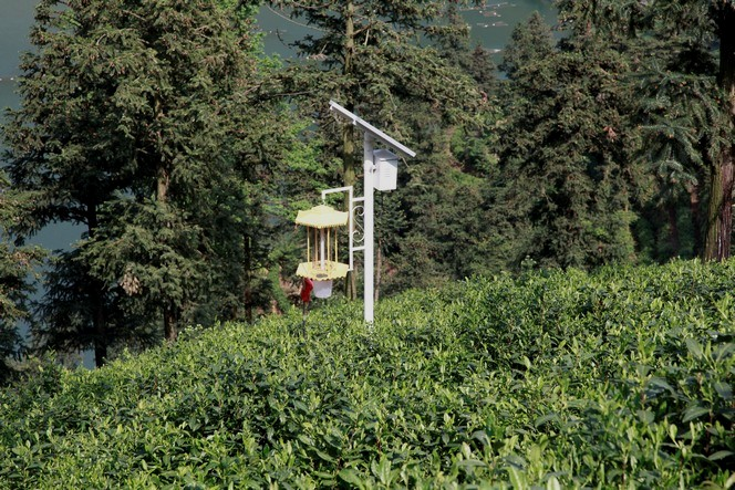 An ingenious solar-powered insect trap