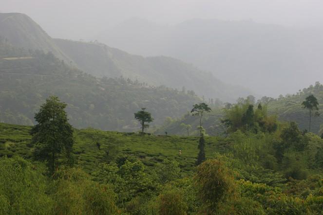 News from Darjeeling