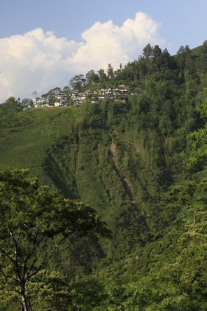 The steep slopes of Darjeeling
