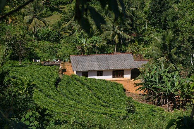 Small plantation in the south of Sri Lanka