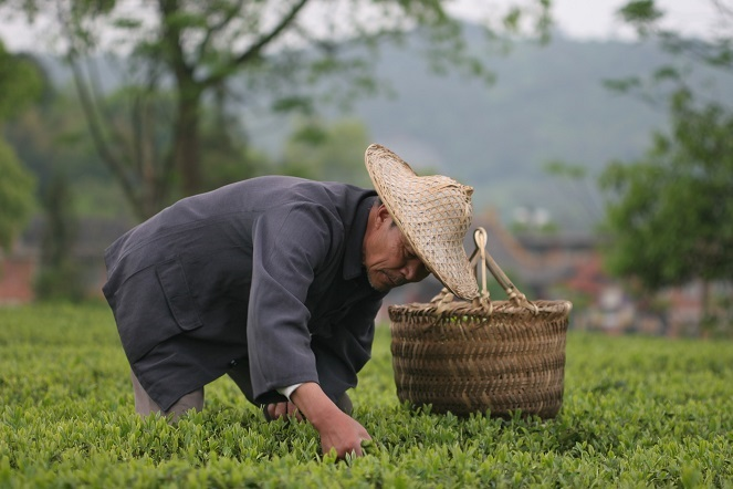 In China, the tea market has changed
