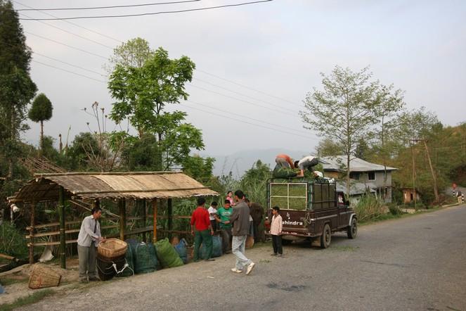 Small-scale tea producers in Sri Lanka