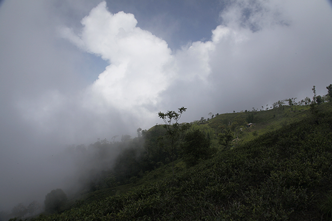 Himalayan mist
