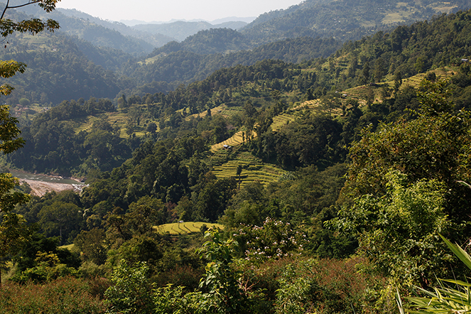 Nepal: exceptional teas and scenery