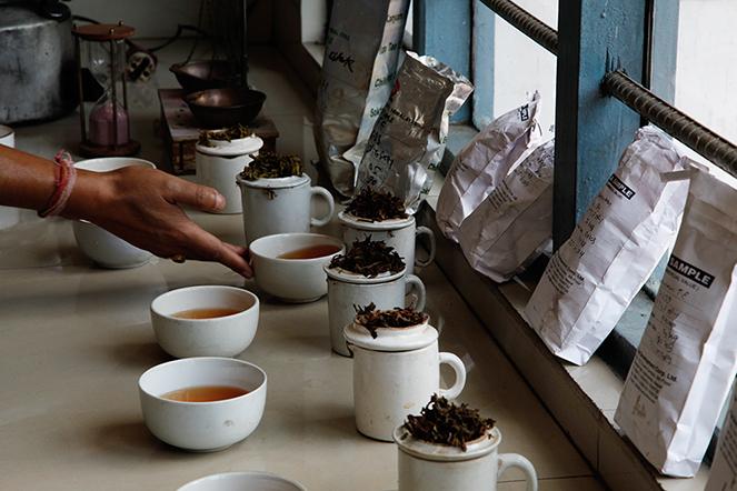 Tasting the spring teas