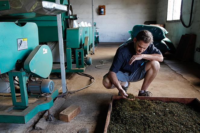 """Alex, pioneer of """"grand cru"""" teas from Malawi"""