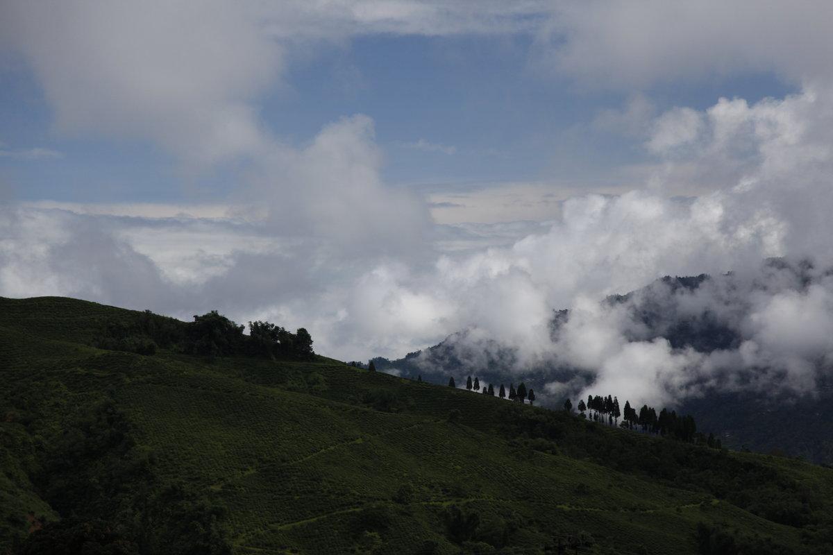 Darjeeling facts and figures