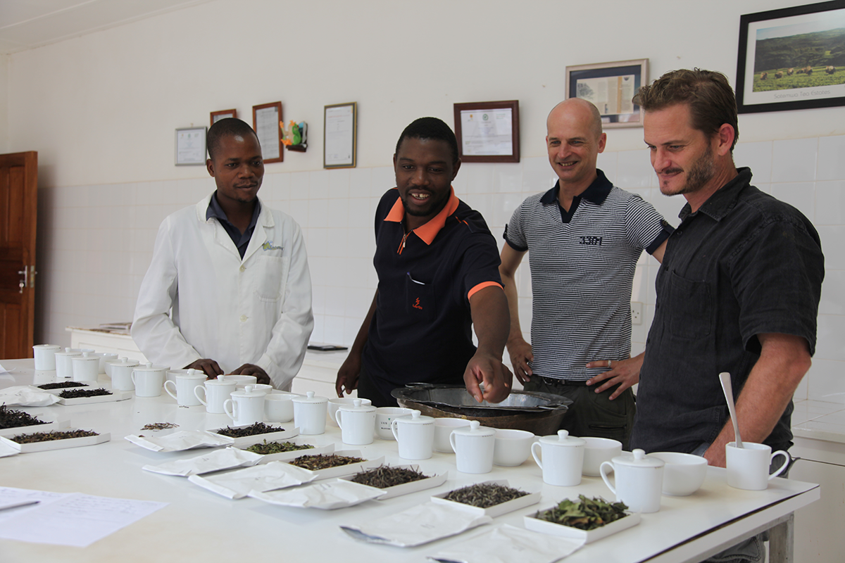 Tasting teas by other farmers