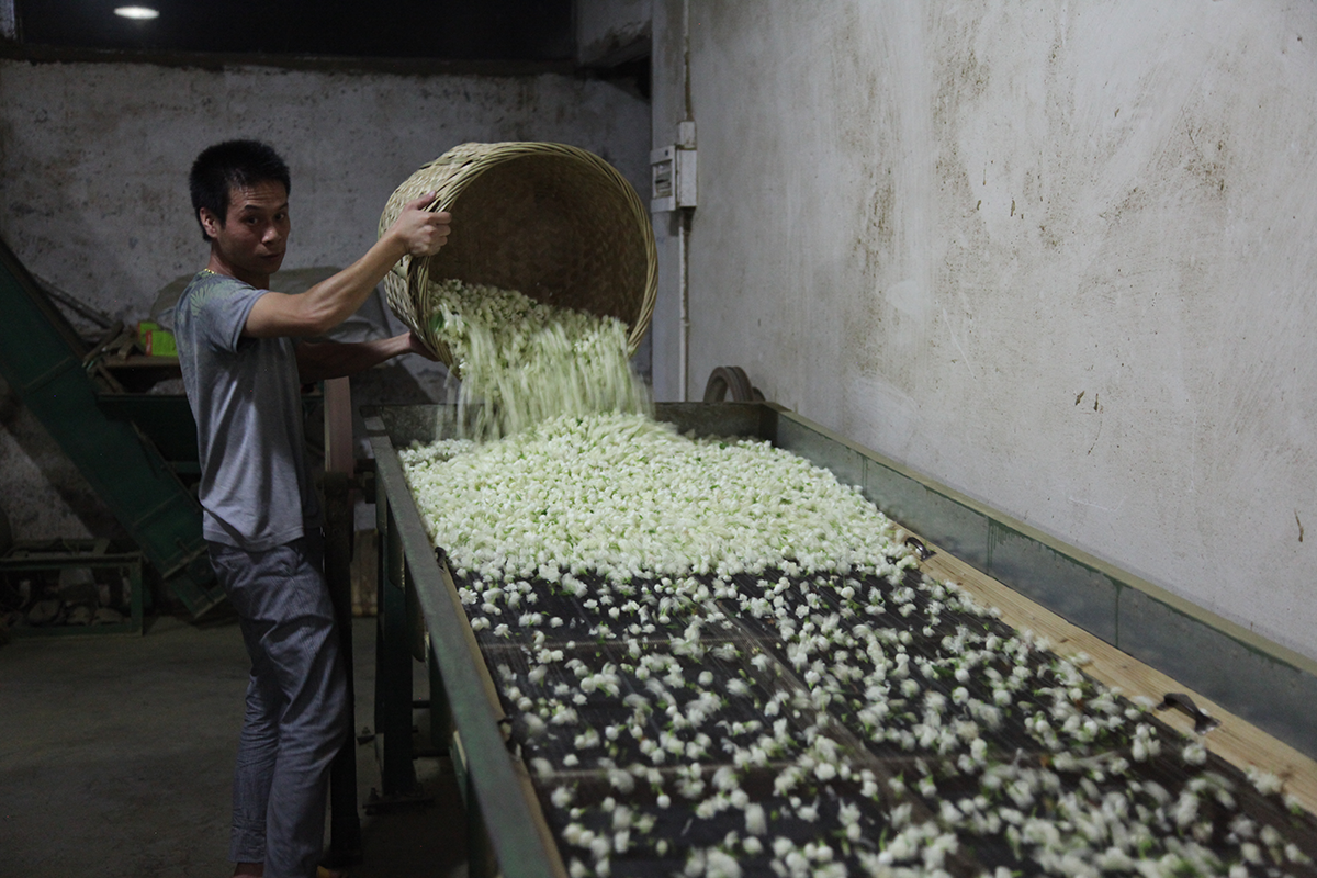 Varying qualities of jasmine tea