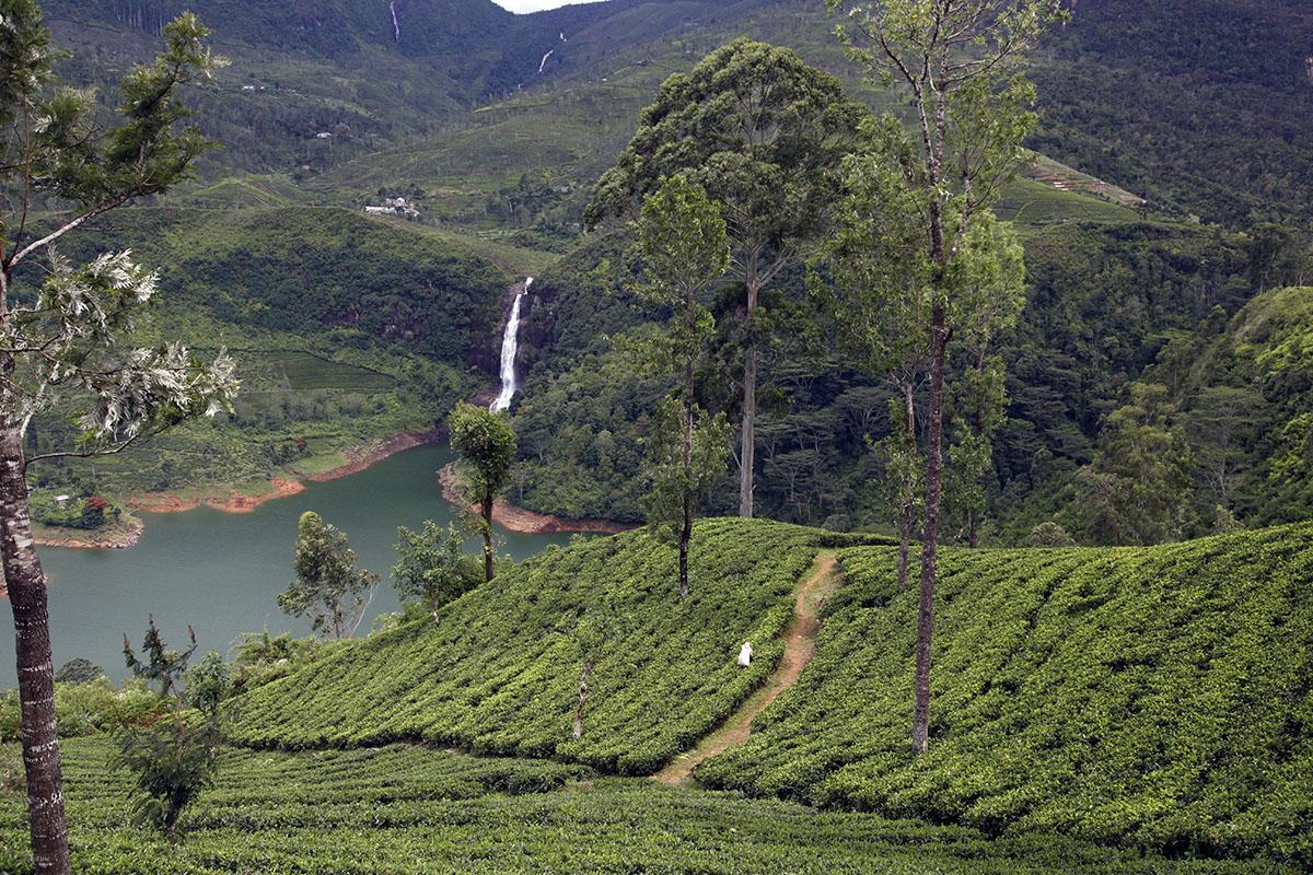 A beautiful landscape does not always produce good tea