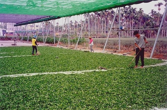 In Taiwan, people take great care of semi-fermented teas