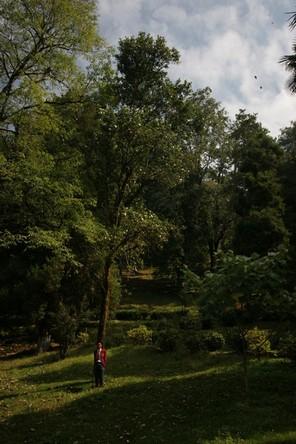 Century-old wild tea plants