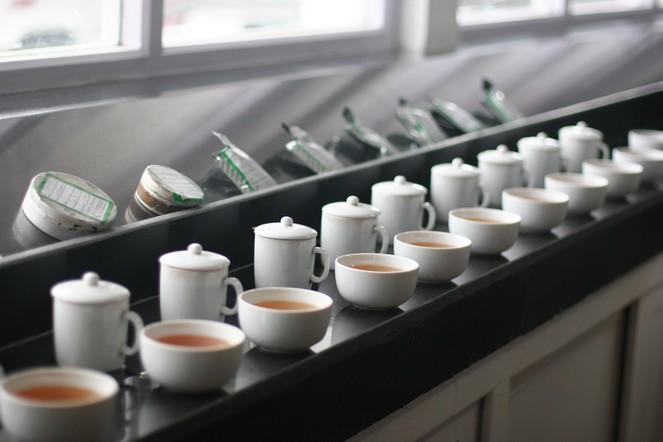 Essay on tea tasting program