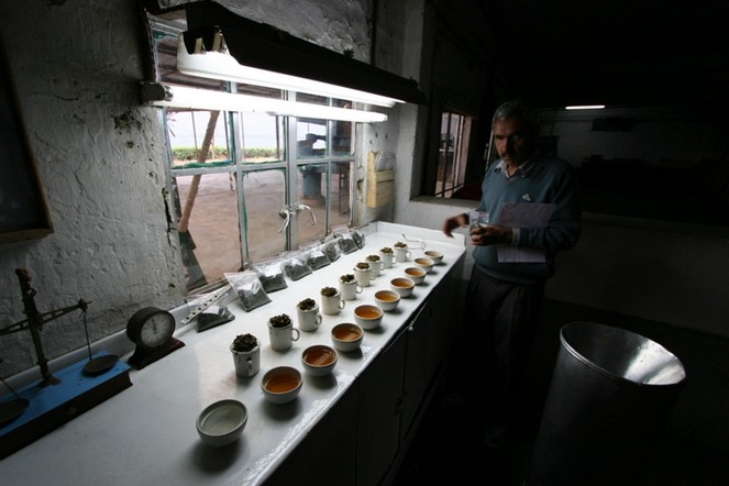 Tasting third-flush Darjeelings - Discovering Tea