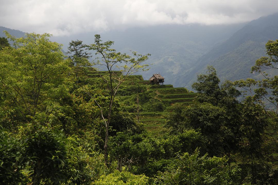 Caobo Vietnam
