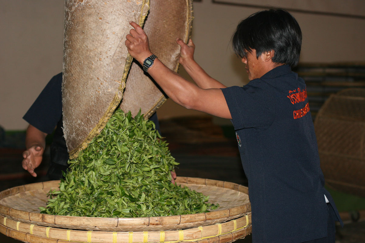 Teas steeped in history, in northern Thailand