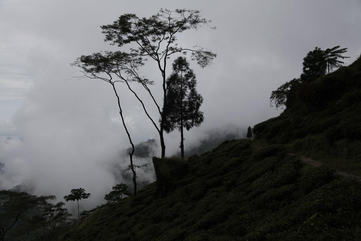 The situation is dangerous in Darjeeling