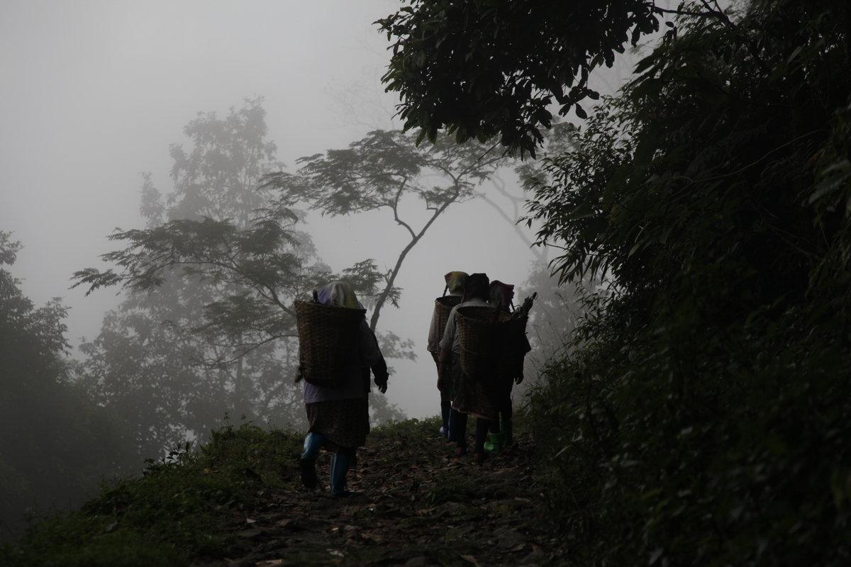 Darjeeling lacks a workforce