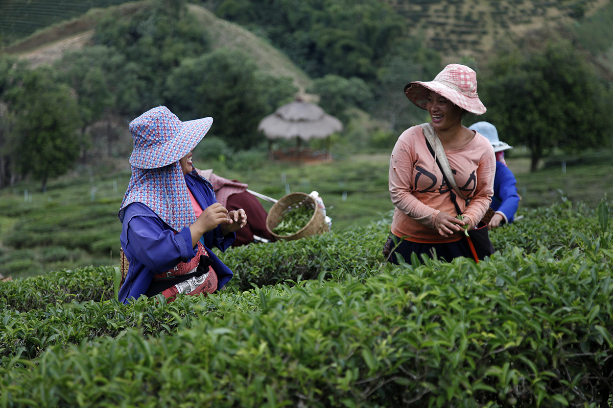 The faces behind your favourite teas