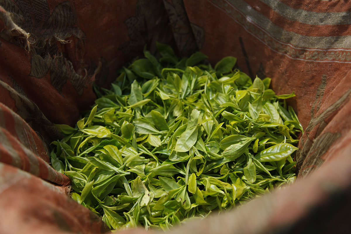 Update on the spring teas