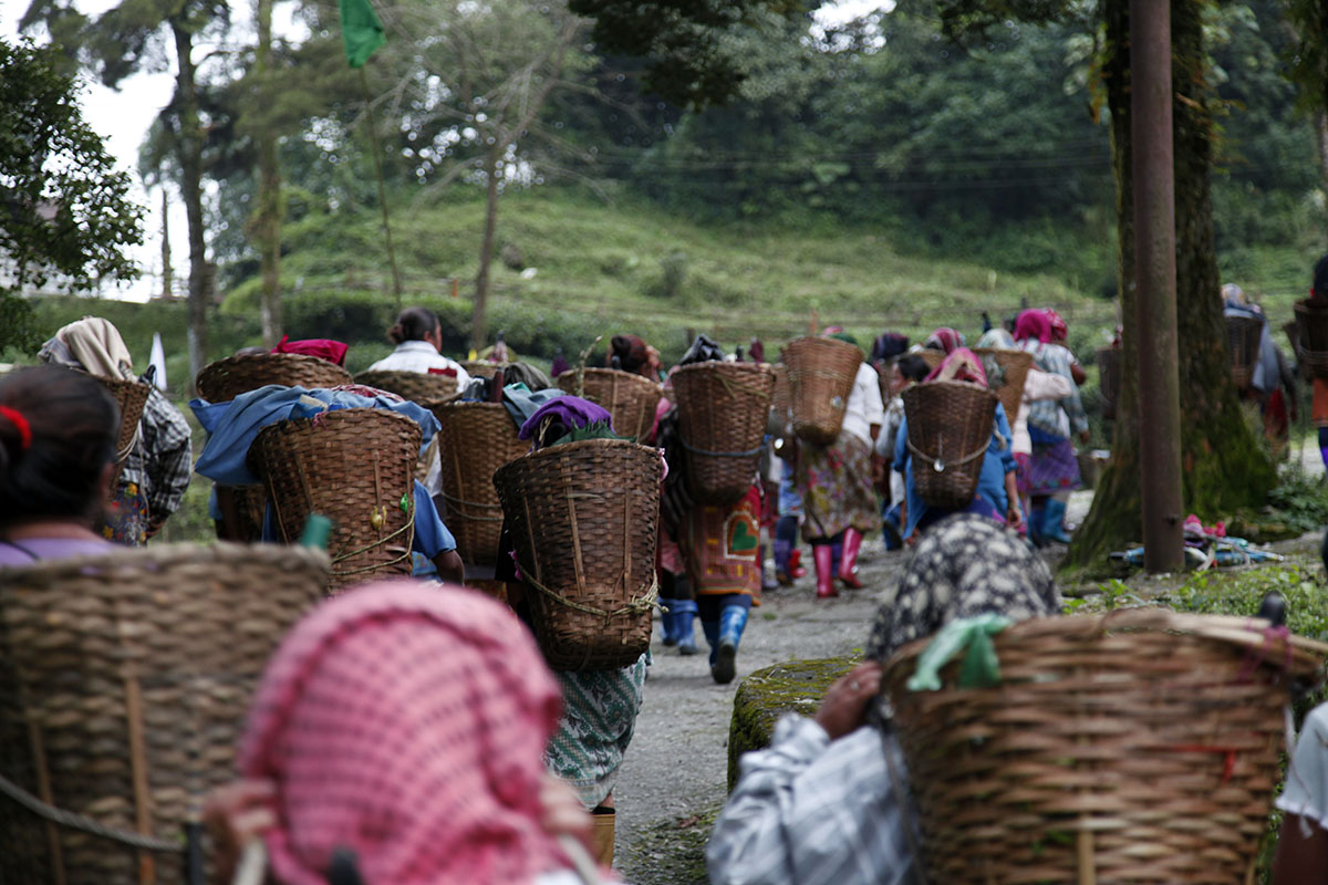 A difficult situation in Darjeeling