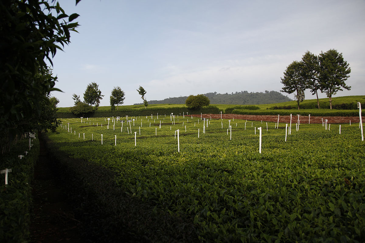 Celebrating the end of lockdown in Kenya